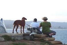 Mit Hund in Frankreich